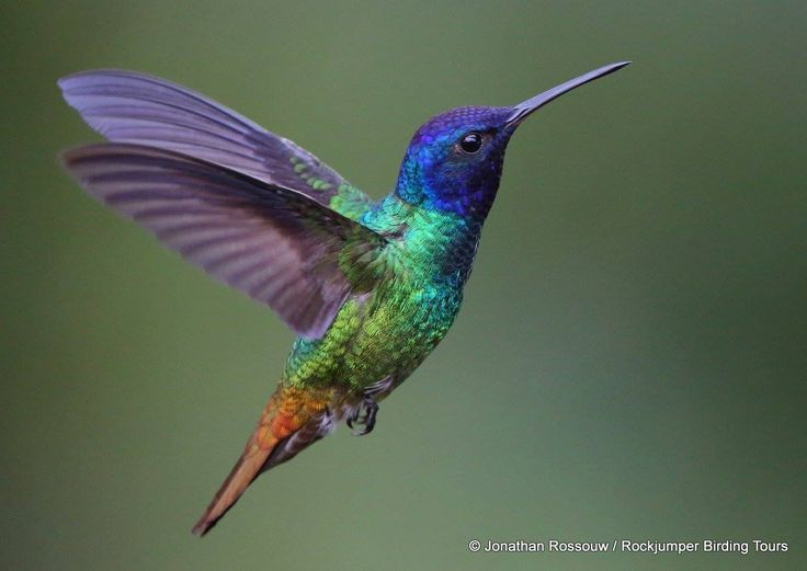 Colorful hummingbirds flying - photo#47